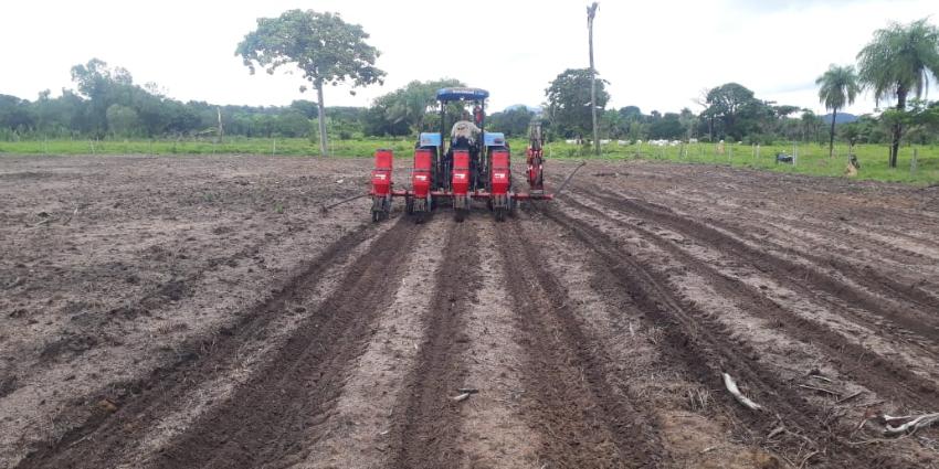 Produtores recebem incentivo para cultivo de sorgo
