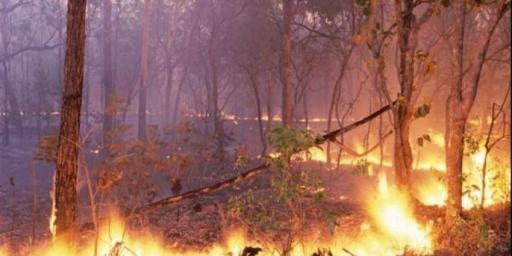 Secretaria Municipal de Meio Ambiente decreta Estado de Emergência Ambiental