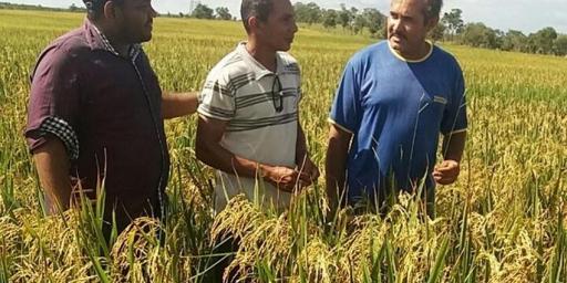 Parceria entre prefeitura e produtores rurais tem resultado positivo