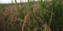 Prefeitura de Redenção incentiva produtores da agricultura familiar
